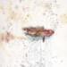 bejeweledfish-756x1024 thumbnail